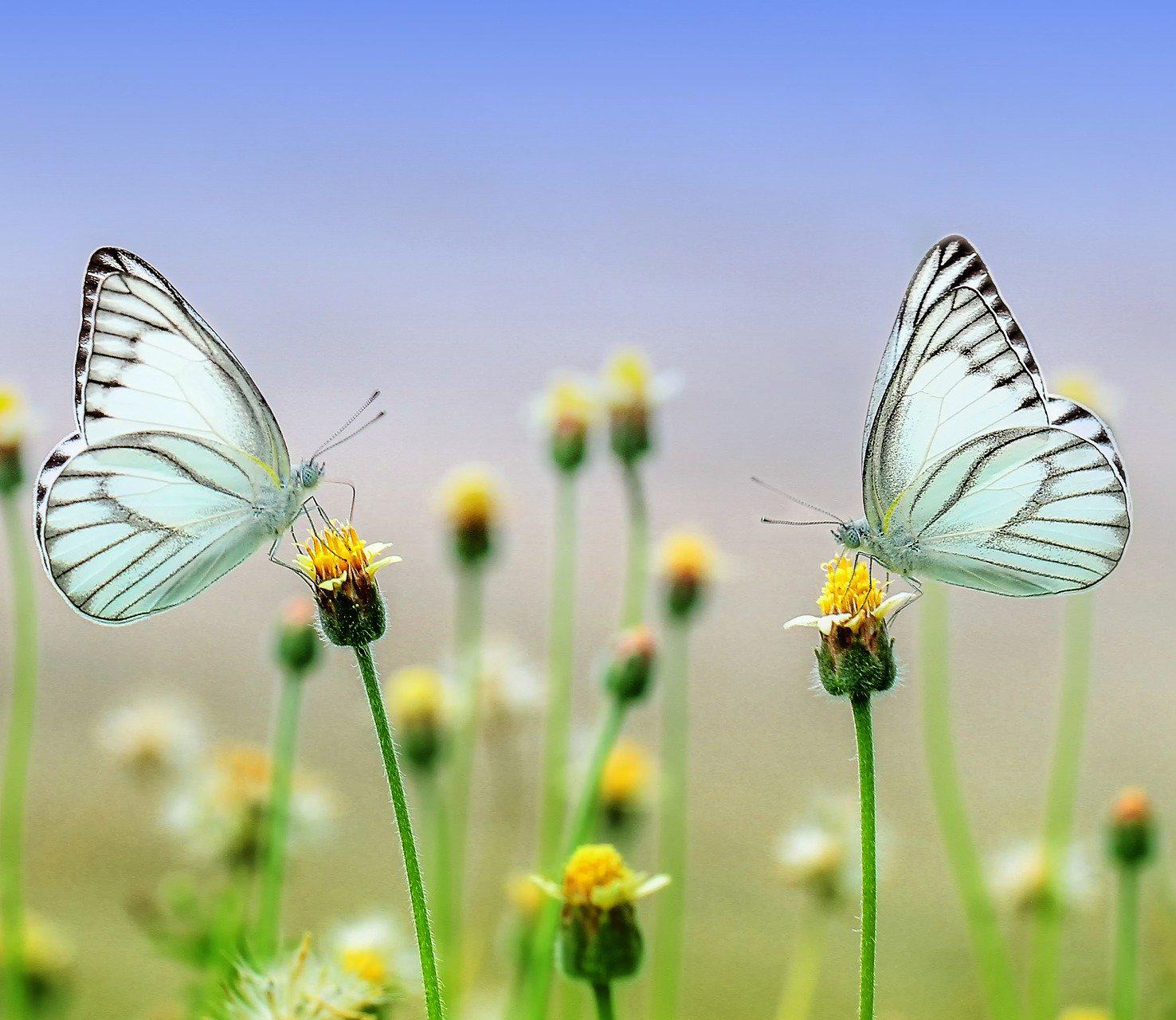 butterfly-1127666_1920_2